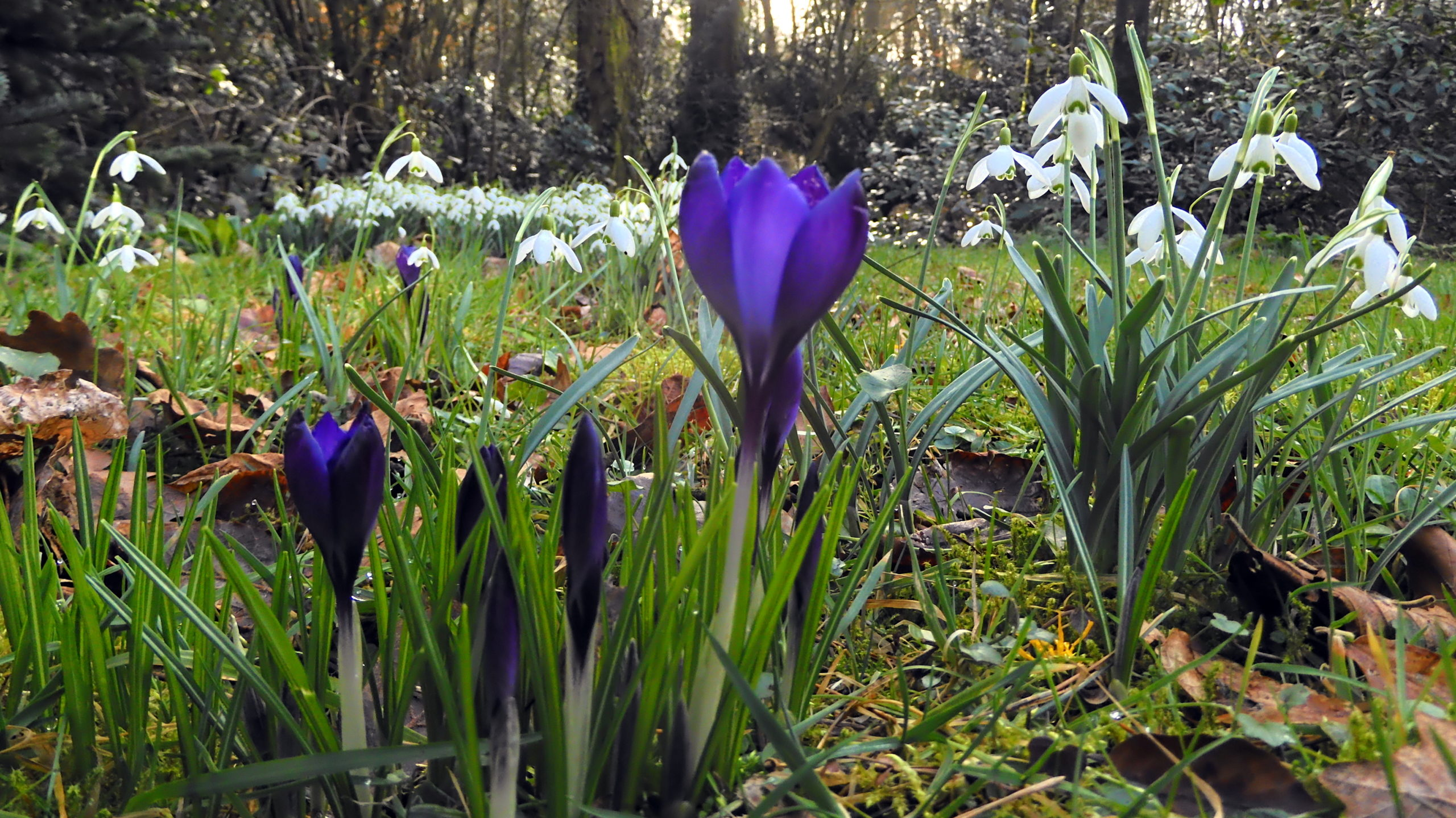 Kommt jetzt schon der Frühling? Meteorologen verzeichnen historischen Temperatursprung